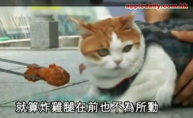Jeong Soon, Kucing Vegetarian dari Korea