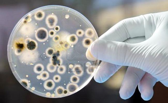 Belajar Berkorban dari Sebuah Sel Bakteri