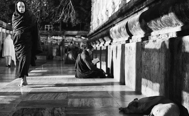Bisakah Hewan Mendengarkan Dhamma?