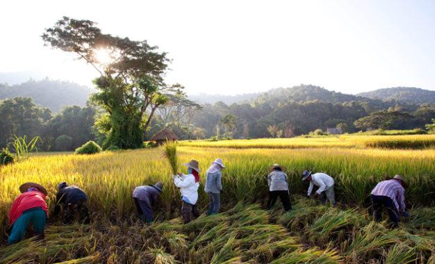 Bertani Sembari Meditasi
