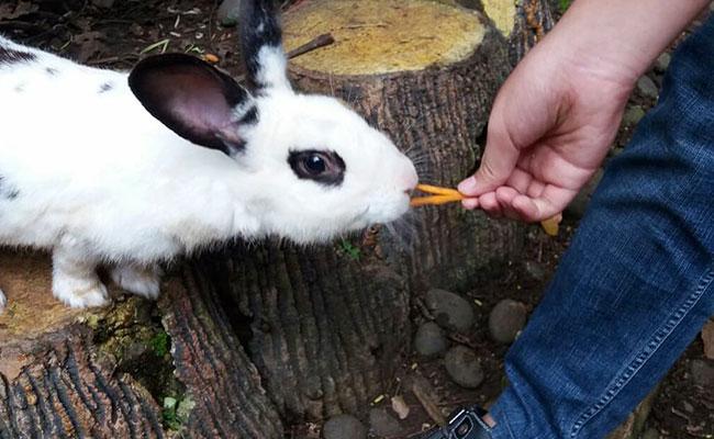 Senang Sekali Ikut Fangshen dan Memberi Makan Kelinci