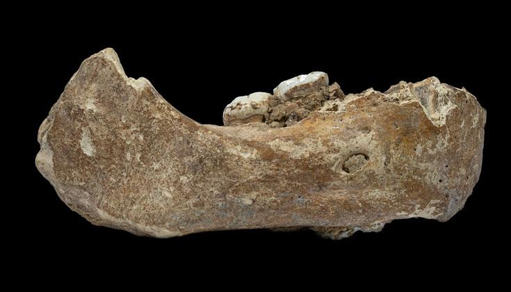 Tulang Rahang Berusia Ribuan Tahun Ditemukan oleh Seorang Biksu