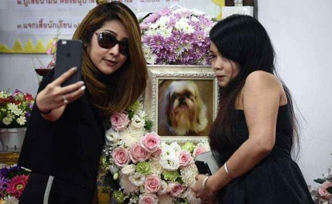 Populer di Thailand! Upacara Pemakaman Buddhis untuk Hewan Peliharaan