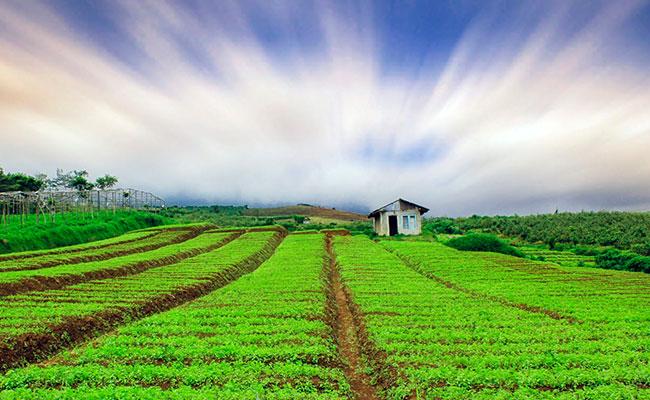 Merawat Ladang Citta Sepanjang Tahun