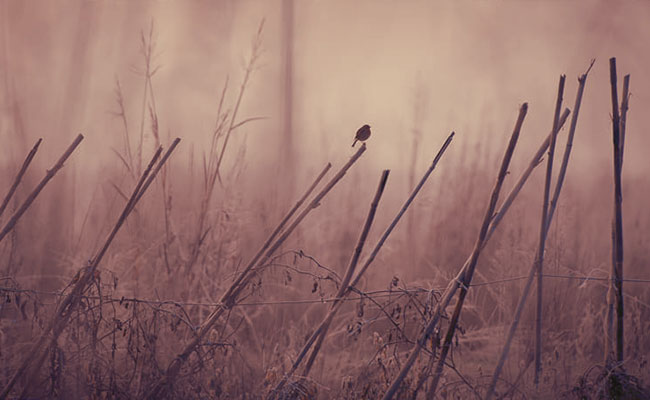 Pangeran Kodok dan Burung Parkit