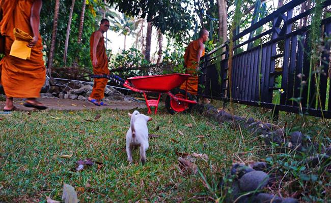 Lindu, Anjing Mungil yang Selamat dari Gempa