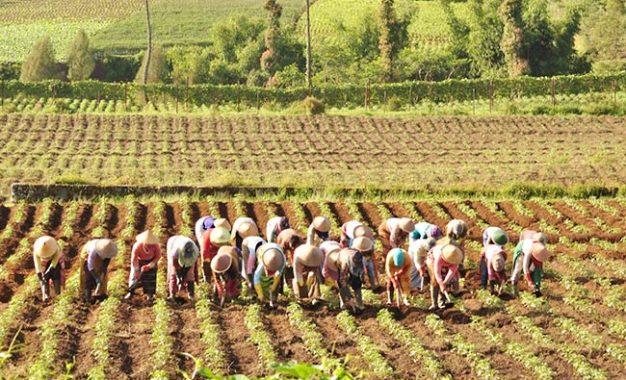 Bertani Sejak Zaman Dulu
