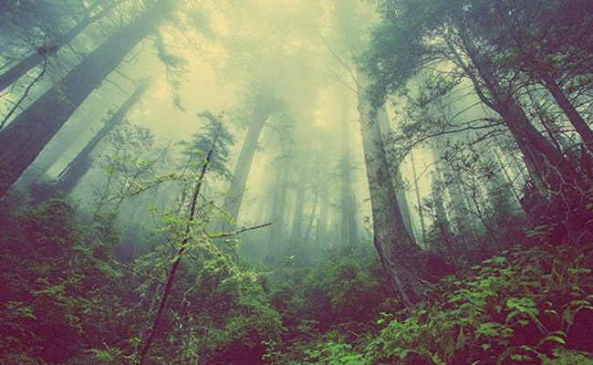 Shinrin yoku – Terapi bagi Badan dan Pikiran
