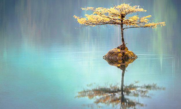 Zen dalam Satu Untai Puisi