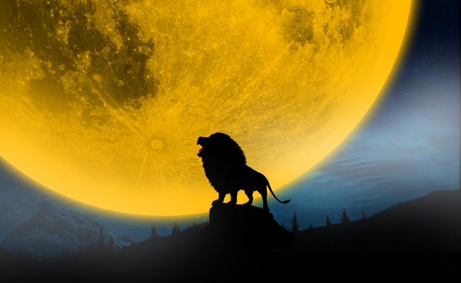 Menjadi Anjing, atau Singa?